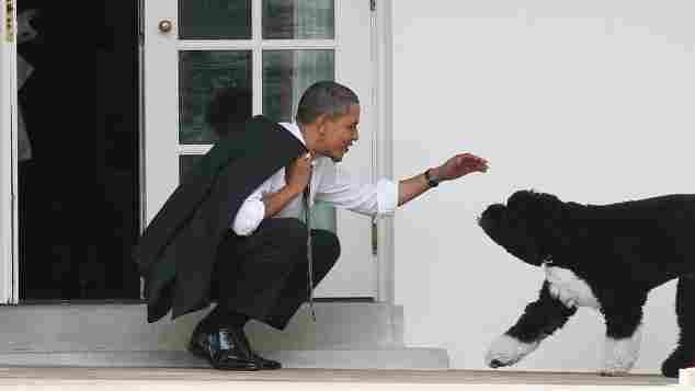 Barack Obama mit Hund Bo im Weißen Haus am 15. März 2012
