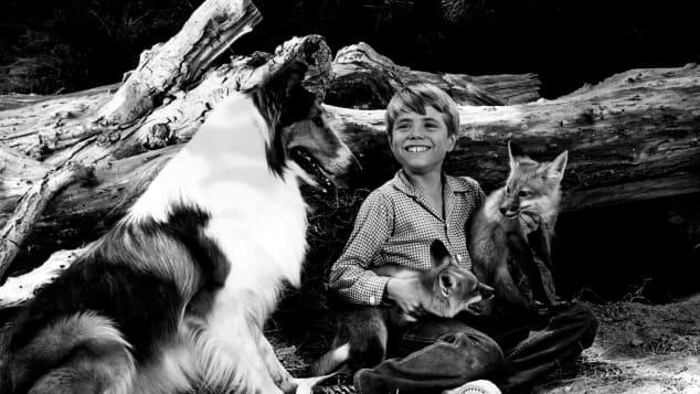 """Lassie"": Jon Provost"