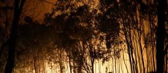Waldbrände Australien Dschungelcamp