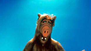 """Außerirdischer """"Alf"""""""