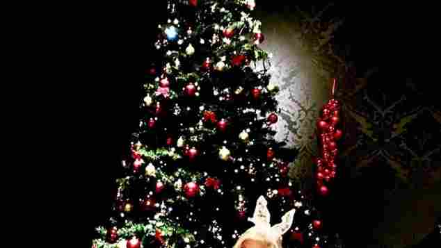 Sophia Vegas super sexy als Bunny an Weihnachten