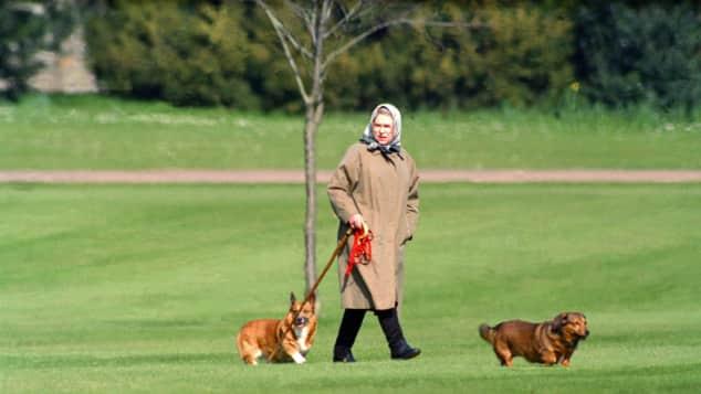 Königin Elisabeth II. trauert um ihren letzten Corgi