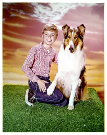 "Jon Provost and ""Lassie"" in 1954 TV show"