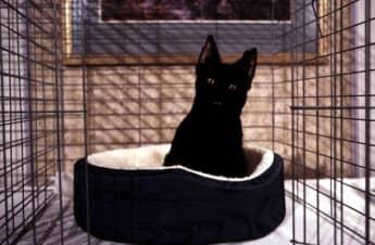 """Salem aus """"Sabrina - total verhext"""""""