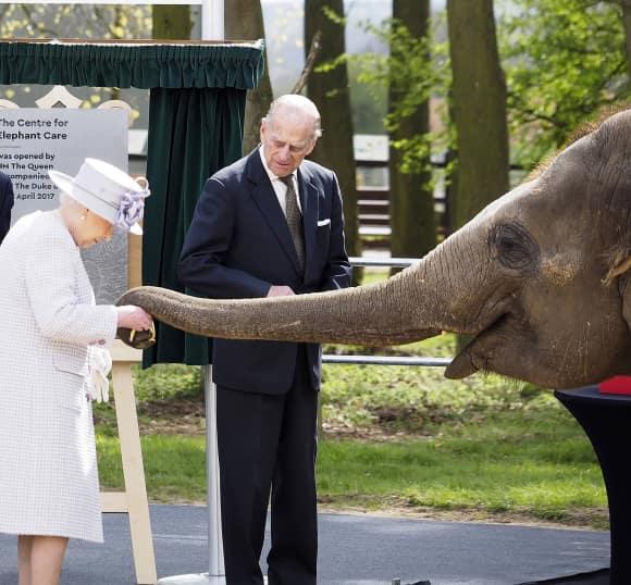 Königin Elisabeth II. streichelt im Zoo einen Elefanten